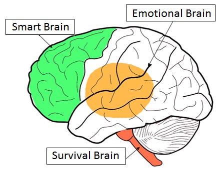 Artius - Understanding Your Brain